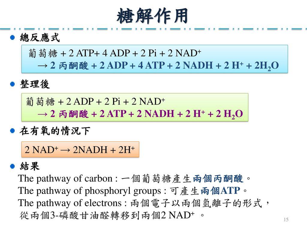 糖解作用 總反應式 葡萄糖 + 2 ATP+ 4 ADP + 2 Pi + 2 NAD+
