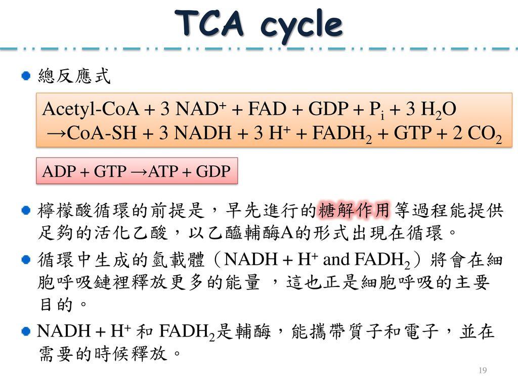 TCA cycle Acetyl-CoA + 3 NAD+ + FAD + GDP + Pi + 3 H2O