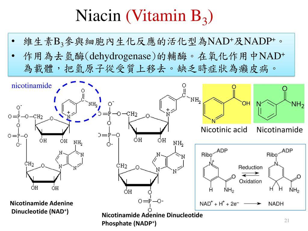 Niacin (Vitamin B3) 維生素B3參與細胞內生化反應的活化型為NAD+及NADP+。