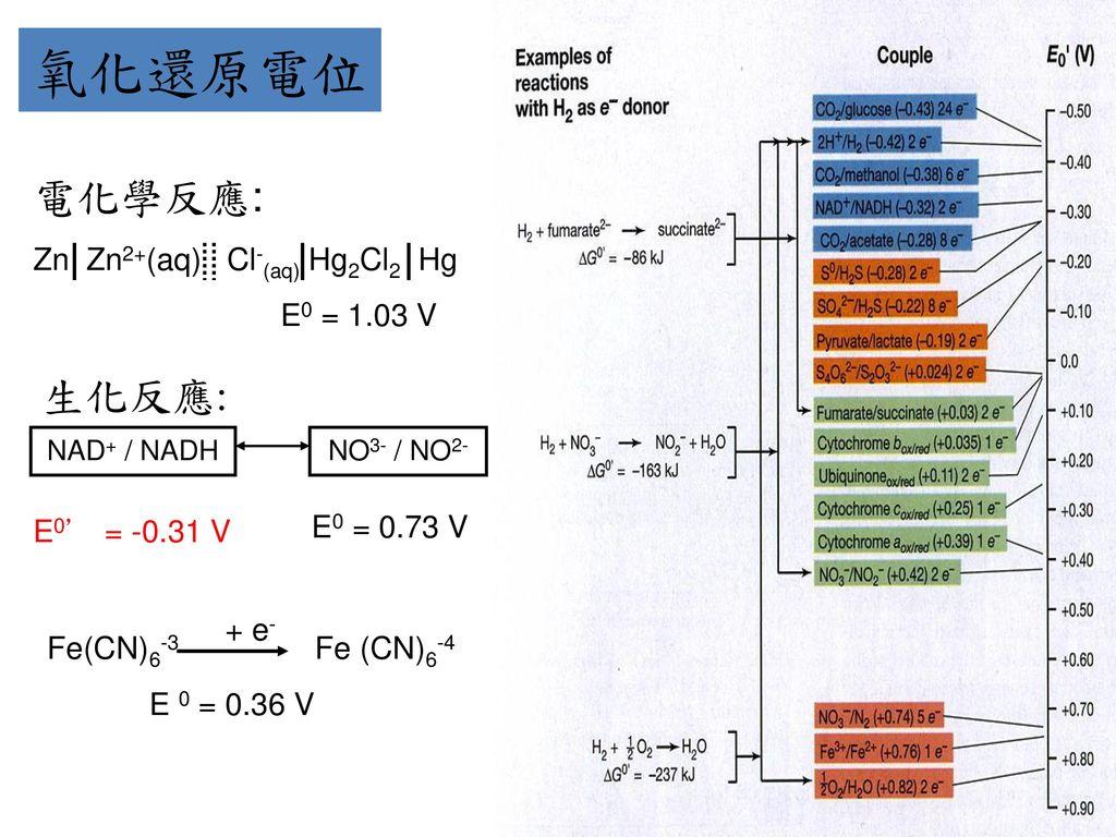 氧化還原電位 電化學反應: 生化反應: Zn Zn2+(aq) Cl-(aq) Hg2Cl2 Hg E0 = 1.03 V