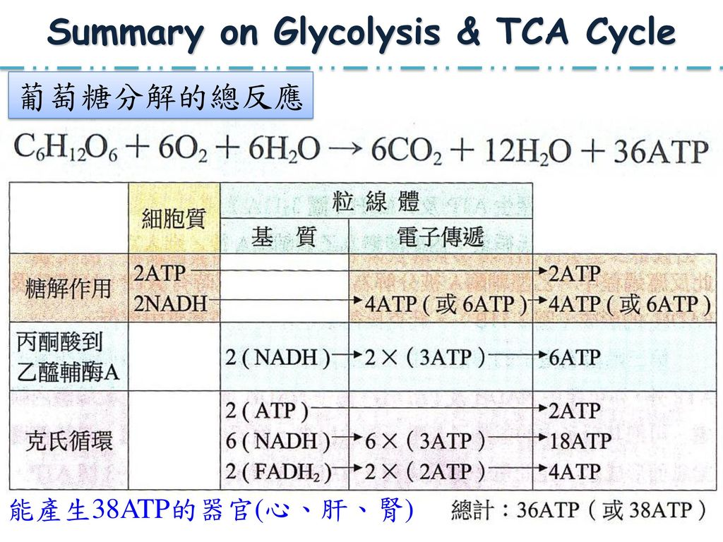 Summary on Glycolysis & TCA Cycle