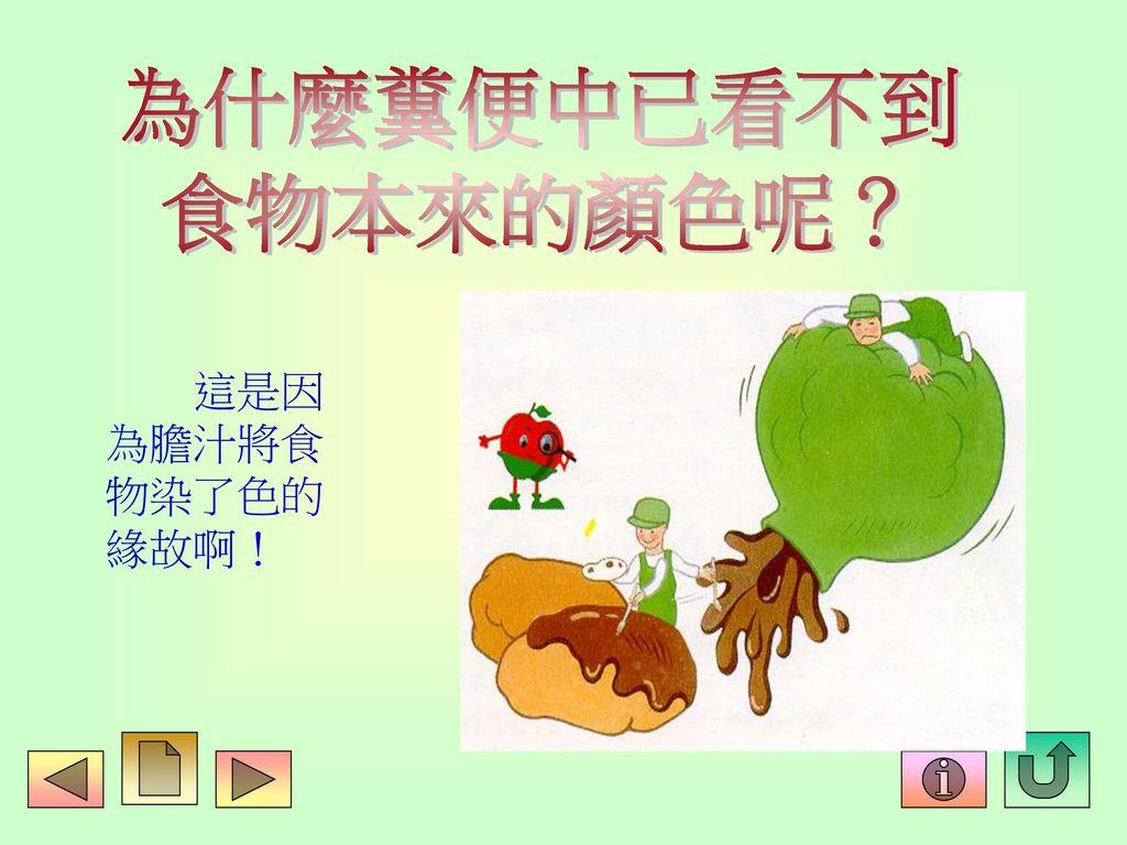 為什麼糞便中已看不到 食物本來的顏色呢? 這是因 為膽汁將食 物染了色的 緣故啊!