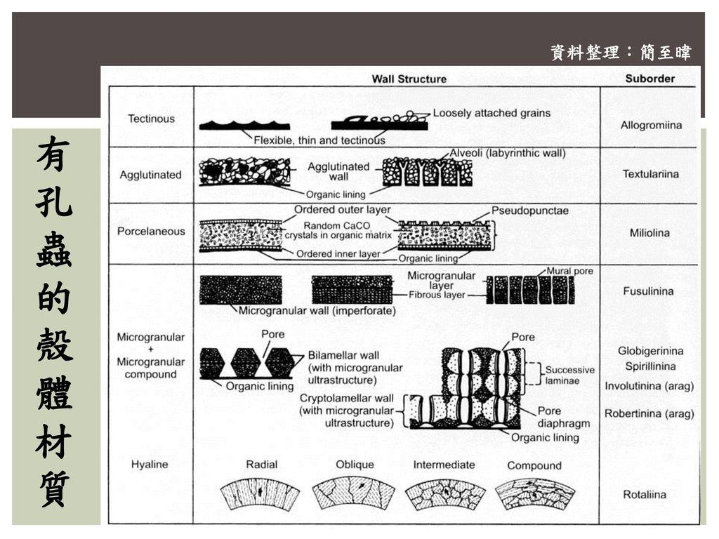 資料整理:簡至暐 有孔蟲的殼體材質