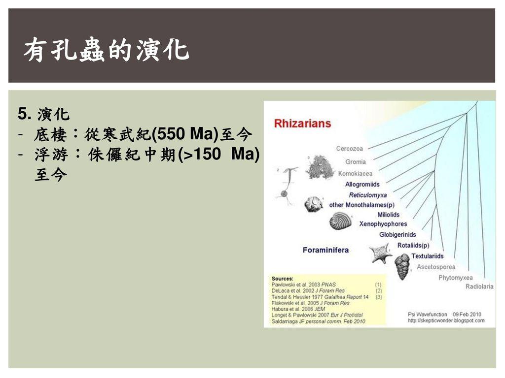有孔蟲的演化 5. 演化 底棲:從寒武紀(550 Ma)至今 浮游:侏儸紀中期(>150 Ma) 至今