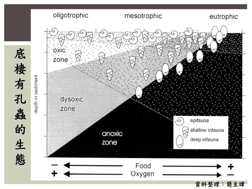 底棲有孔蟲的生態 資料整理:簡至暐