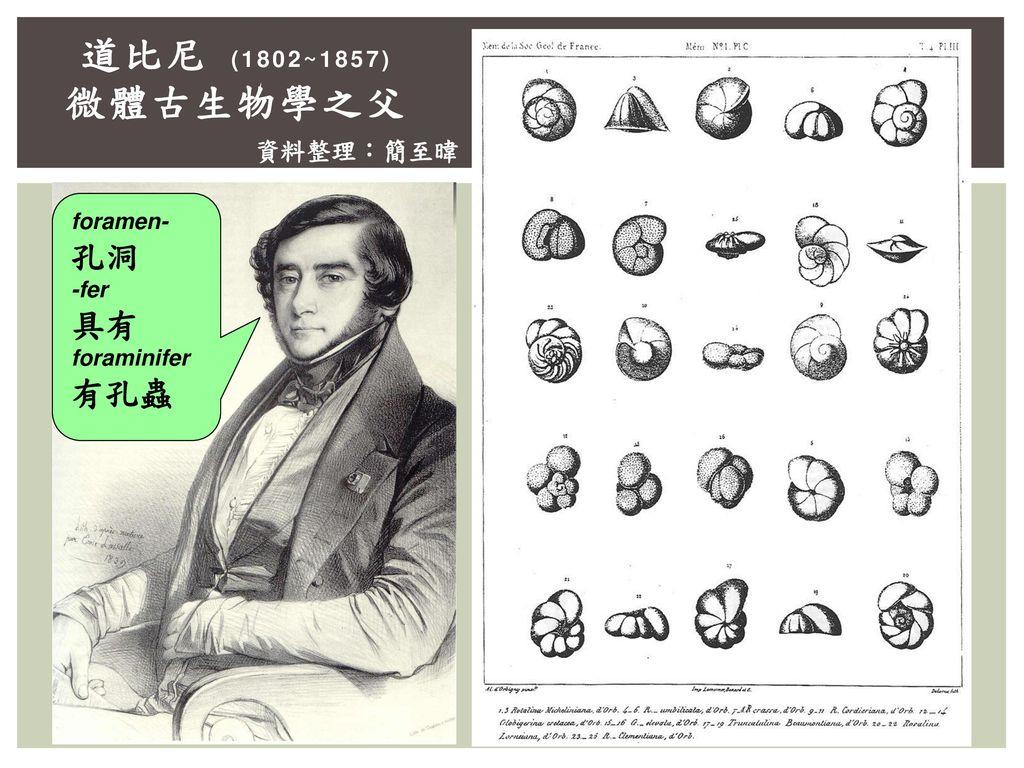 道比尼 (1802~1857) 微體古生物學之父 資料整理:簡至暐 foramen- 孔洞 -fer 具有 foraminifer 有孔蟲