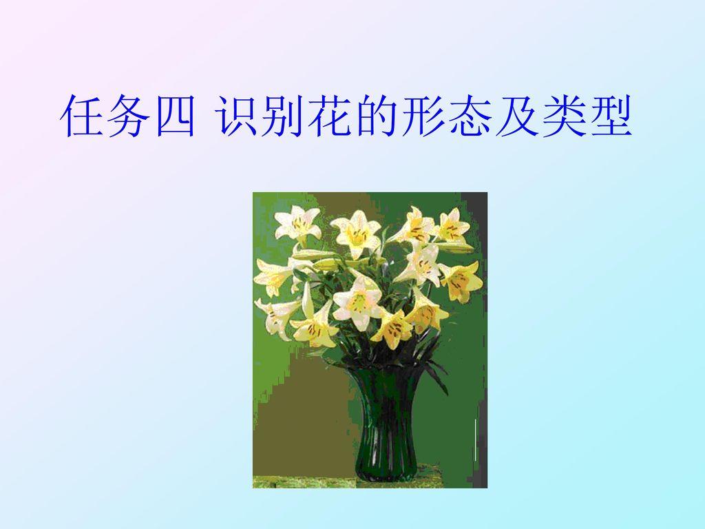 任务四 识别花的形态及类型