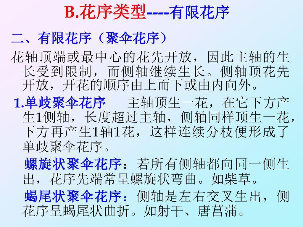 B.花序类型----有限花序 二、有限花序(聚伞花序)