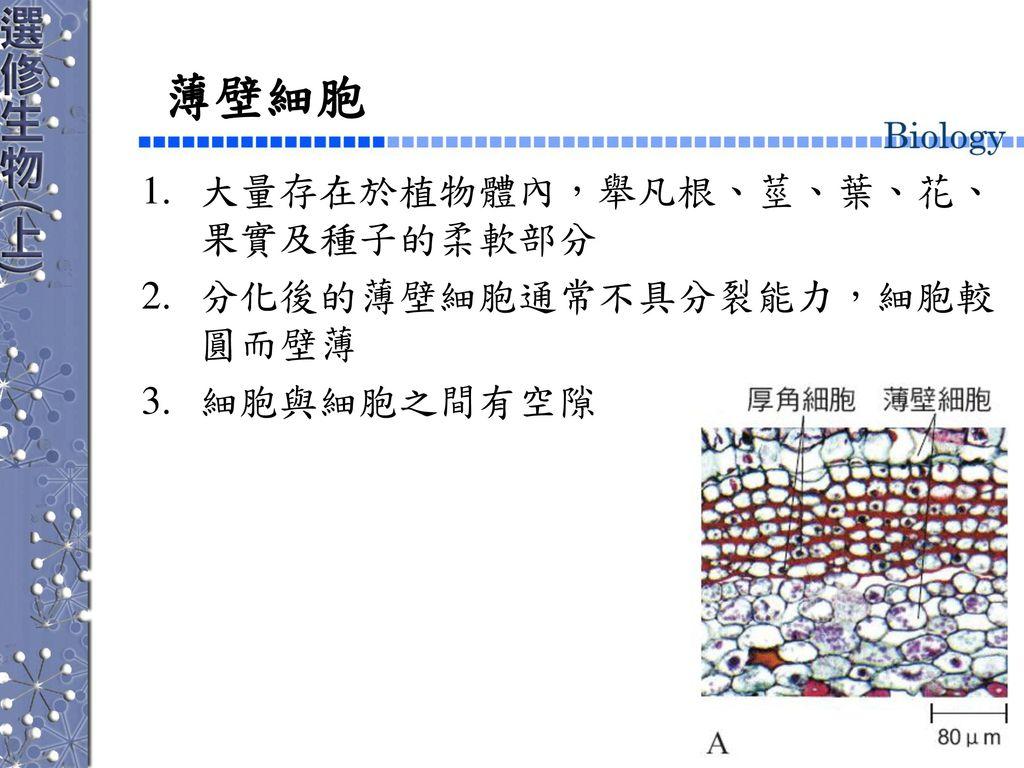 第二章 生物的基本構造與功能 第3節 細胞的特化與分工.