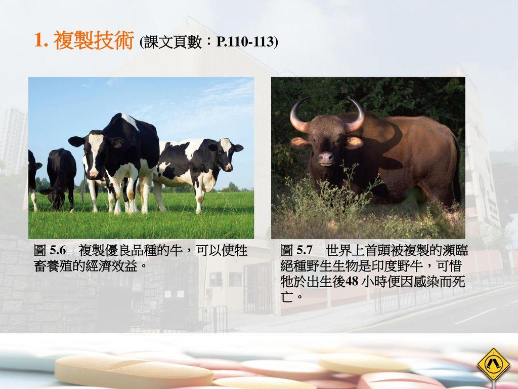 1. 複製技術 (課文頁數:P.110-113) 圖 5.6 複製優良品種的牛,可以使牲畜養殖的經濟效益。
