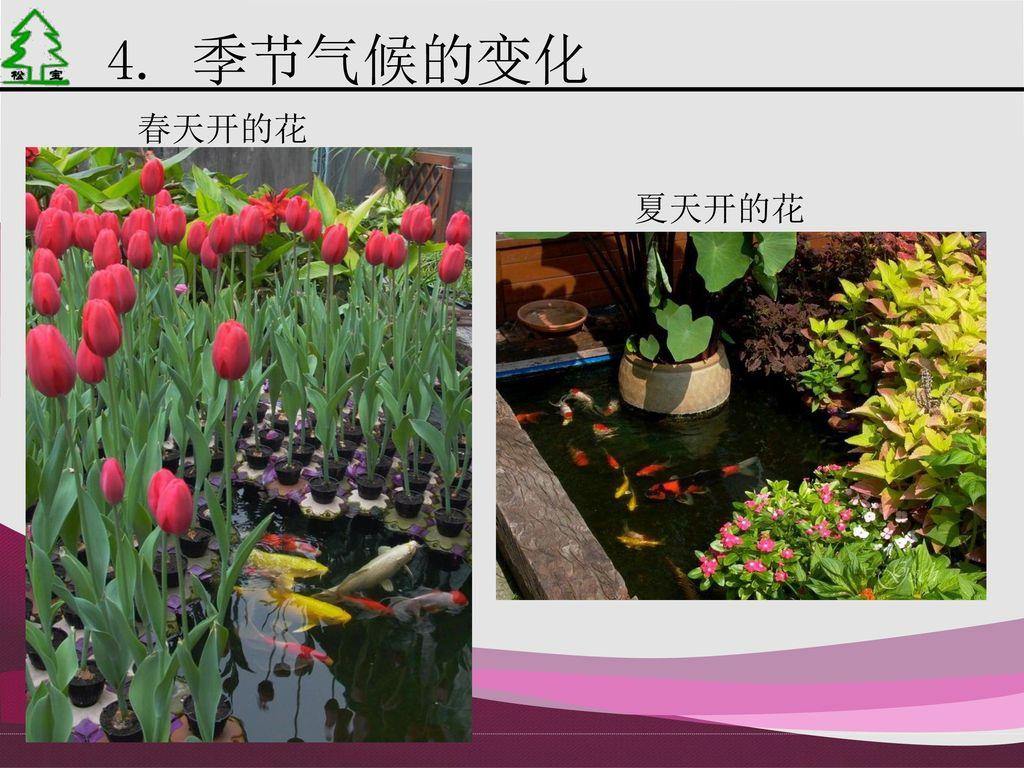 4. 季节气候的变化 春天开的花 夏天开的花