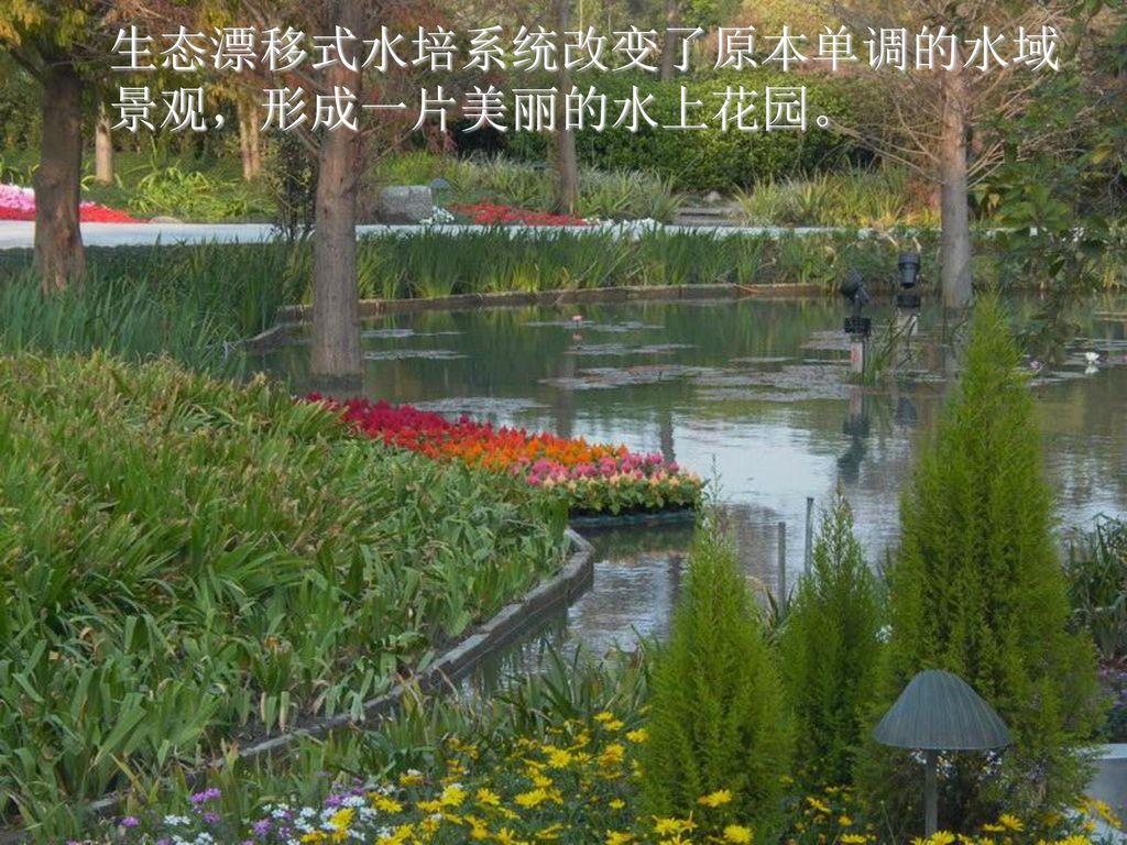 生态漂移式水培系统改变了原本单调的水域景观,形成一片美丽的水上花园。