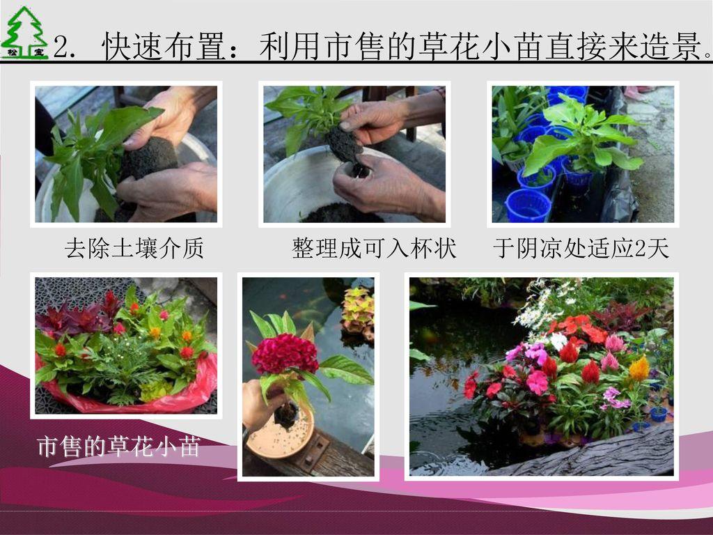 2. 快速布置:利用市售的草花小苗直接来造景。