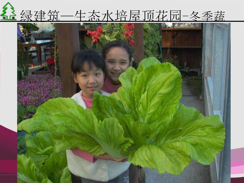 绿建筑—生态水培屋顶花园-冬季蔬菜