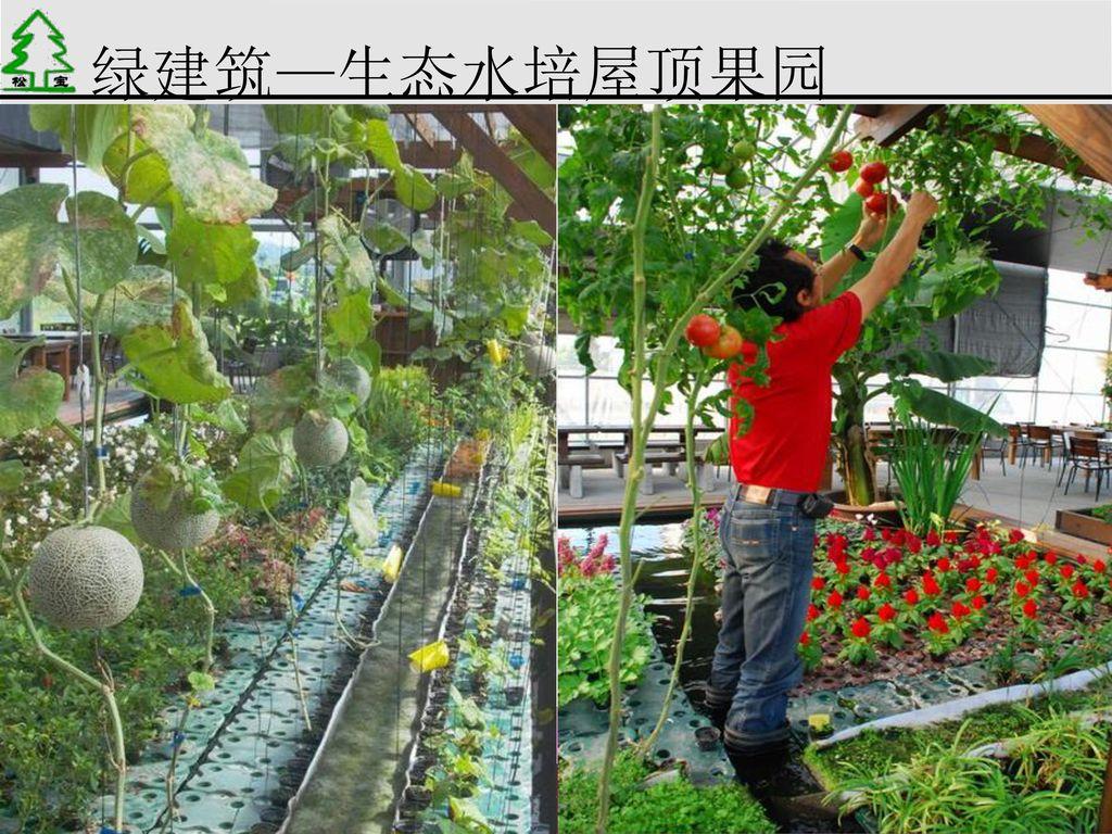 绿建筑—生态水培屋顶果园