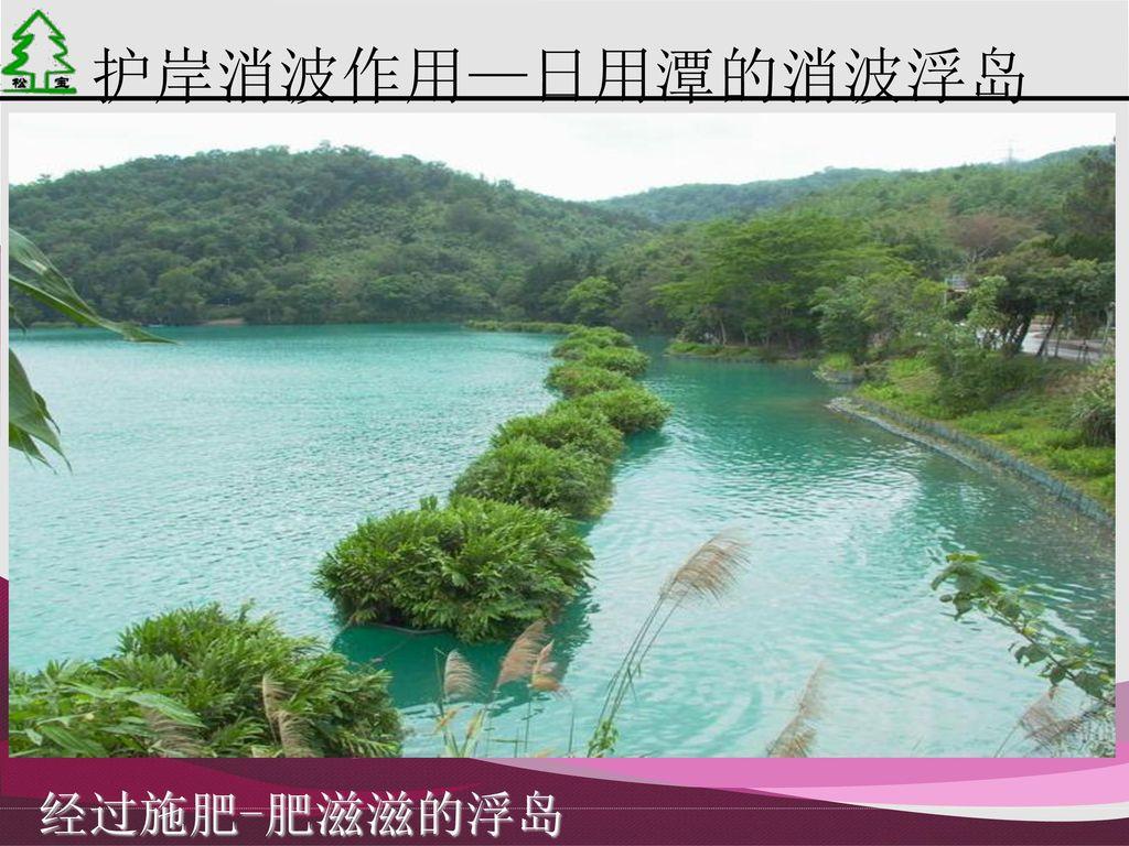 护岸消波作用—日用潭的消波浮岛 经过施肥-肥滋滋的浮岛