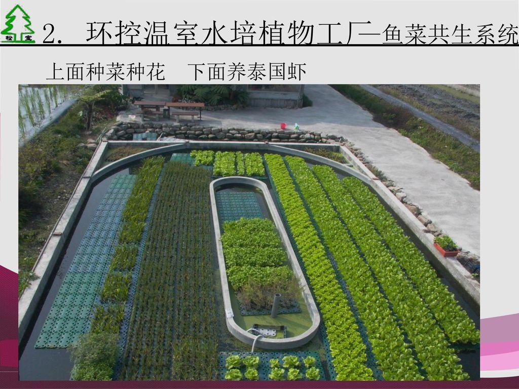 2. 环控温室水培植物工厂 —鱼菜共生系统 上面种菜种花 下面养泰国虾