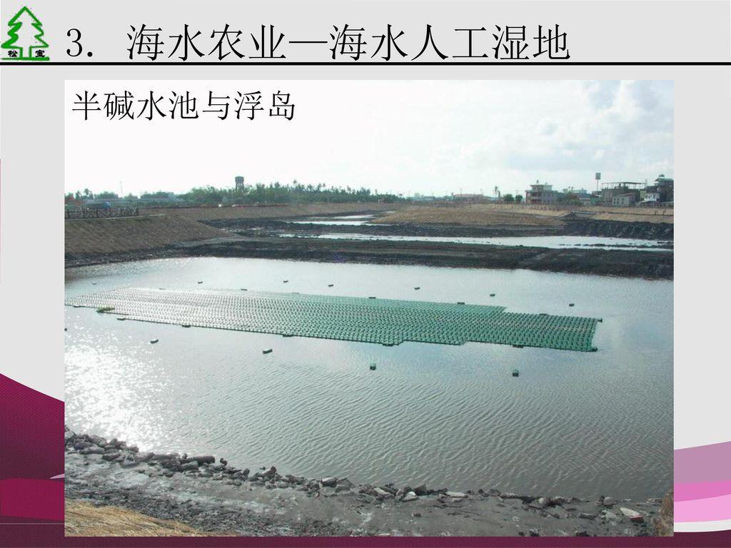 3. 海水农业—海水人工湿地 半碱水池与浮岛