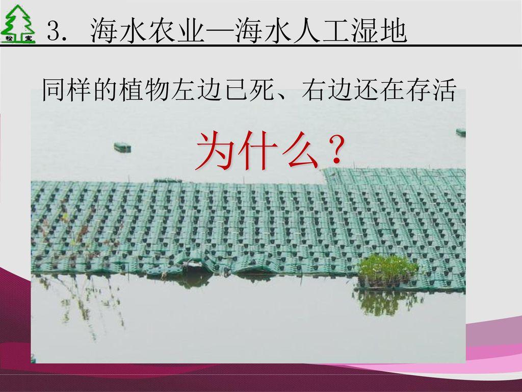 3. 海水农业—海水人工湿地 同样的植物左边已死、右边还在存活 为什么?