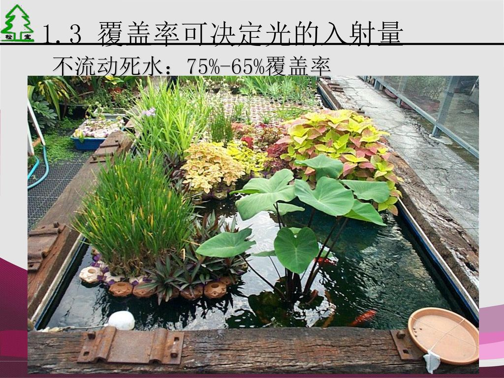 1.3 覆盖率可决定光的入射量 不流动死水:75%-65%覆盖率