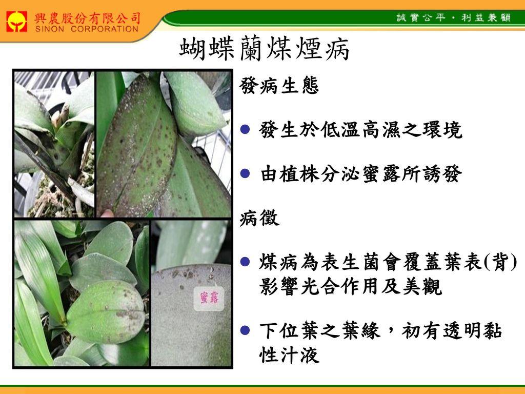 蝴蝶蘭煤煙病 發病生態 發生於低溫高濕之環境 由植株分泌蜜露所誘發 病徵 煤病為表生菌會覆蓋葉表(背) 影響光合作用及美觀