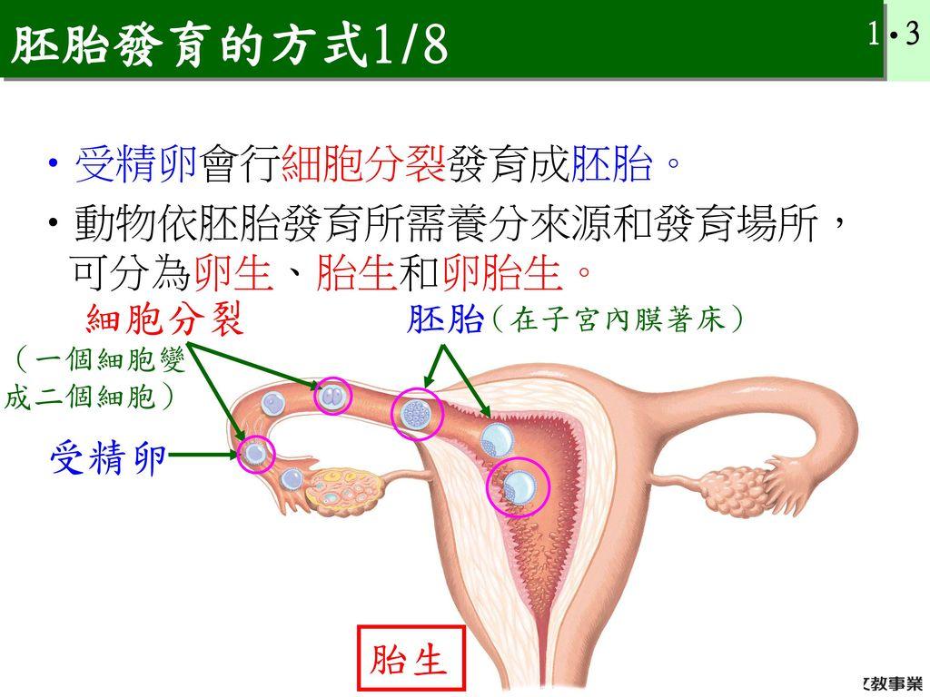 胚胎發育的方式1/8 受精卵會行細胞分裂發育成胚胎。 動物依胚胎發育所需養分來源和發育場所,可分為卵生、胎生和卵胎生。 細胞分裂 胚胎