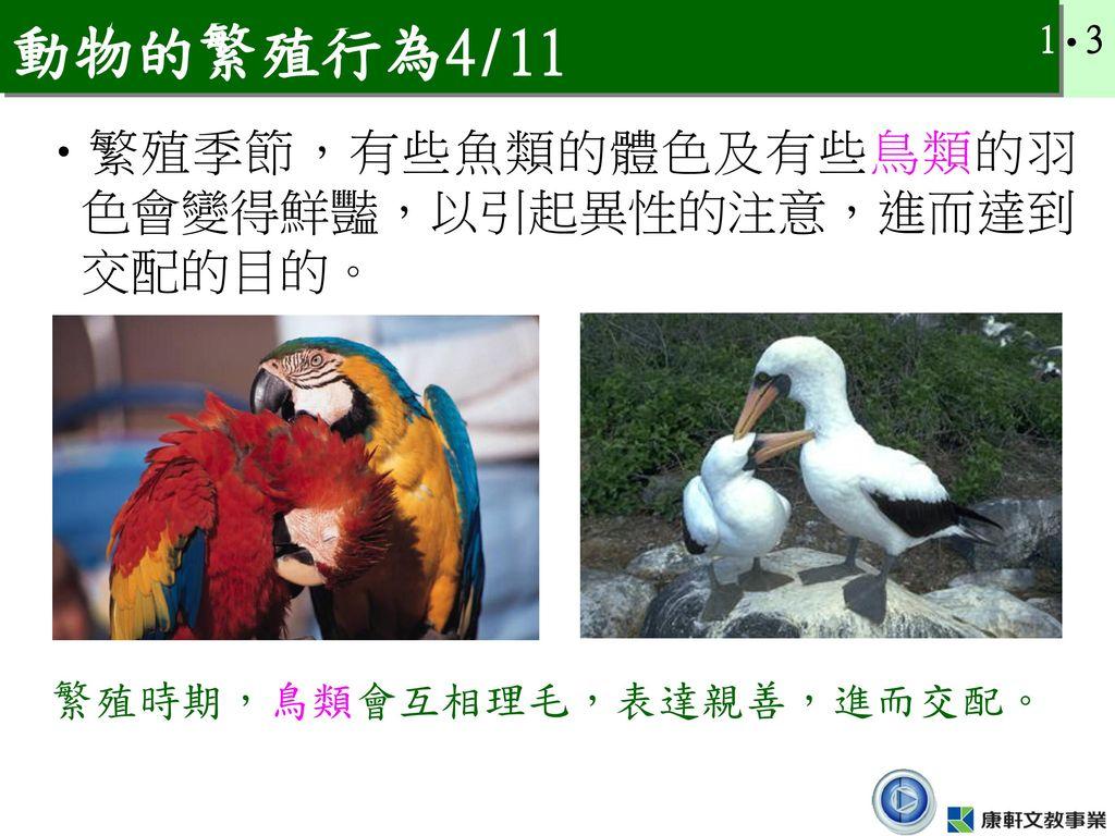 動物的繁殖行為4/11 繁殖季節,有些魚類的體色及有些鳥類的羽色會變得鮮豔,以引起異性的注意,進而達到交配的目的。