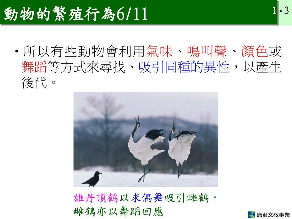 動物的繁殖行為6/11 所以有些動物會利用氣味、鳴叫聲、顏色或舞蹈等方式來尋找、吸引同種的異性,以產生後代。