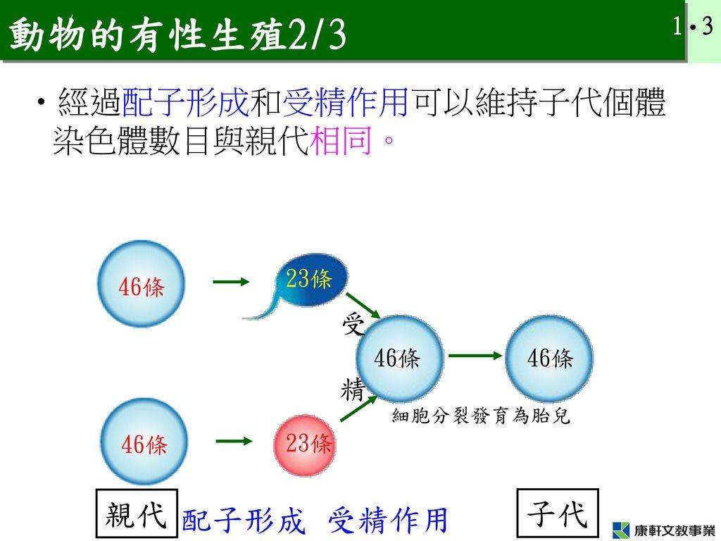 動物的有性生殖2/3 經過配子形成和受精作用可以維持子代個體染色體數目與親代相同。 親代 子代 配子形成 受精作用 受 精 23條 46條