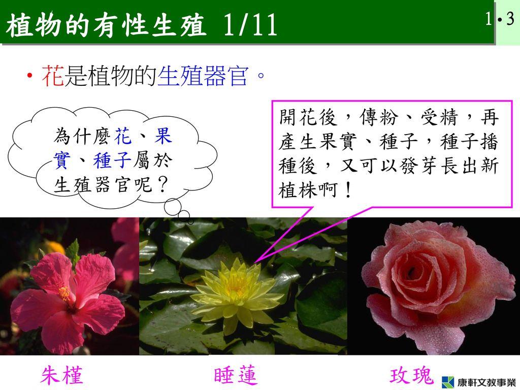 植物的有性生殖 1/11 花是植物的生殖器官。 朱槿 睡蓮 玫瑰 開花後,傳粉、受精,再產生果實、種子,種子播種後,又可以發芽長出新植株啊!