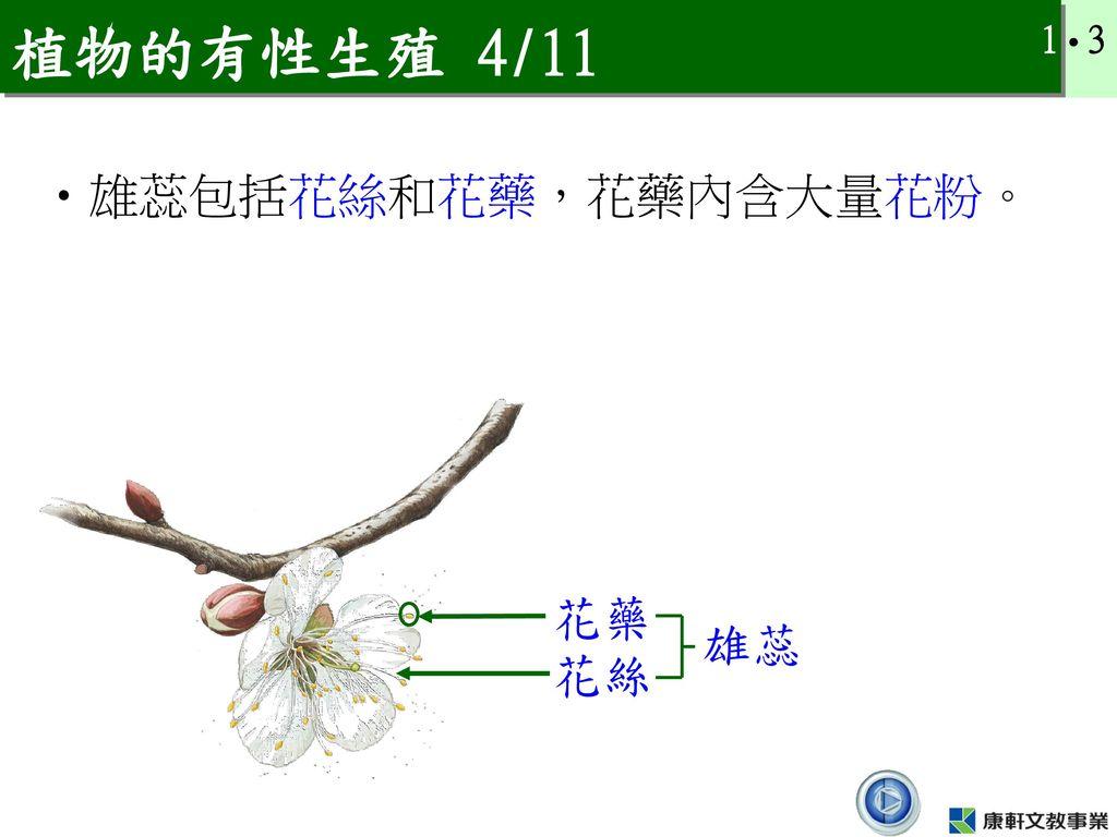 植物的有性生殖 4/11 雄蕊包括花絲和花藥,花藥內含大量花粉。 花藥 雄蕊 花絲