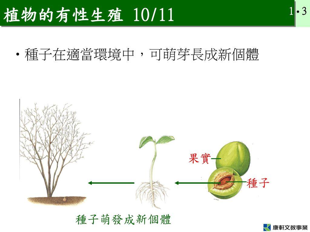 植物的有性生殖 10/11 種子在適當環境中,可萌芽長成新個體 果實 種子 種子萌發成新個體
