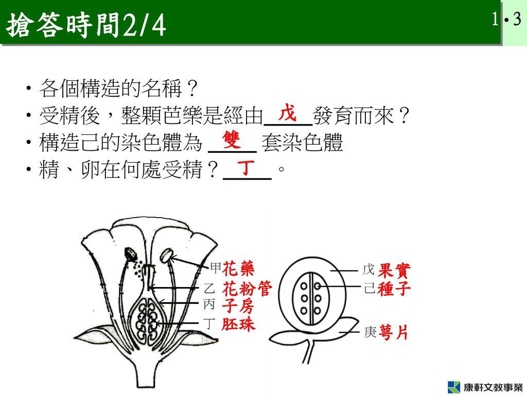 搶答時間2/4 各個構造的名稱? 受精後,整顆芭樂是經由_____發育而來? 戊 構造己的染色體為 _____ 套染色體