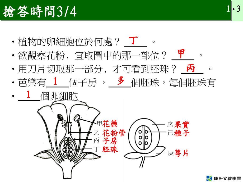 搶答時間3/4 丁 甲 丙 植物的卵細胞位於何處? _____ 。 欲觀察花粉﹐宜取圖中的那一部位? _____ 。