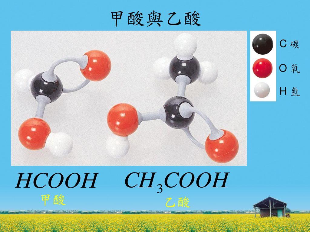 甲酸與乙酸 C 碳 O 氧 H 氫 甲酸 乙酸