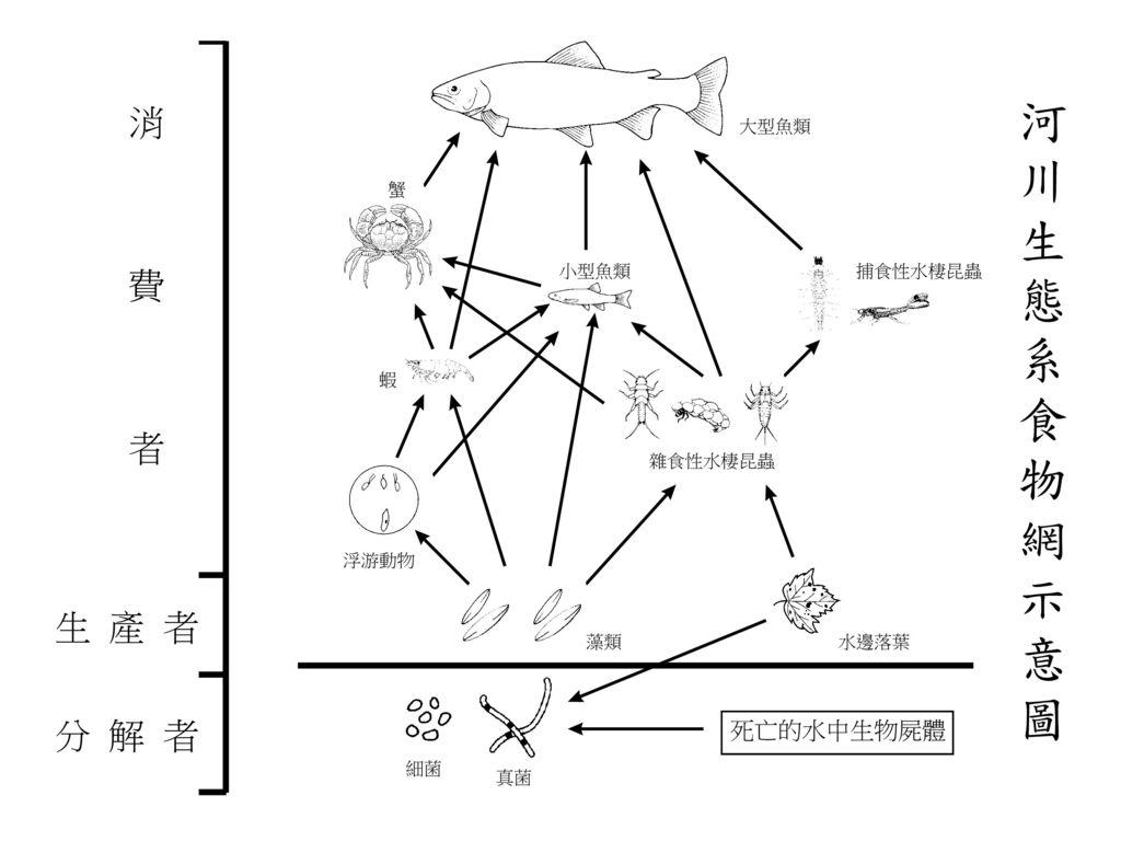 河川生態系食物網示意圖