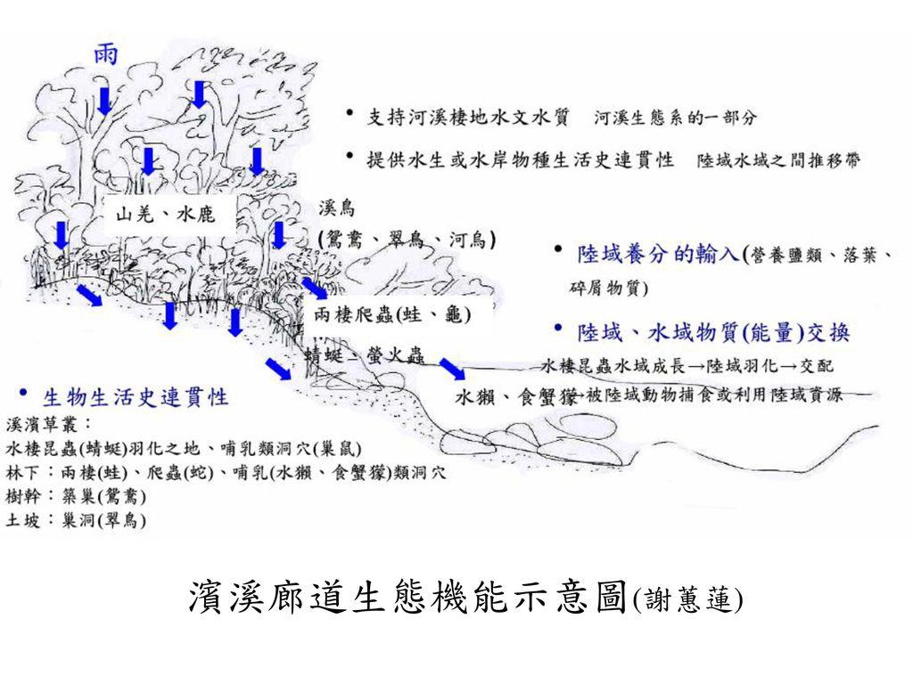 濱溪廊道生態機能示意圖(謝蕙蓮)