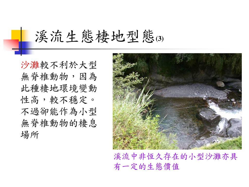溪流生態棲地型態(3) 沙灘較不利於大型無脊椎動物,因為此種棲地環境變動性高,較不穩定。不過卻能作為小型無脊椎動物的棲息場所