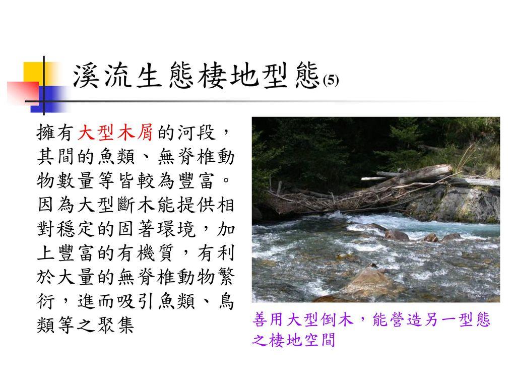 溪流生態棲地型態(5) 擁有大型木屑的河段,其間的魚類、無脊椎動物數量等皆較為豐富。因為大型斷木能提供相對穩定的固著環境,加上豐富的有機質,有利於大量的無脊椎動物繁衍,進而吸引魚類、鳥類等之聚集.