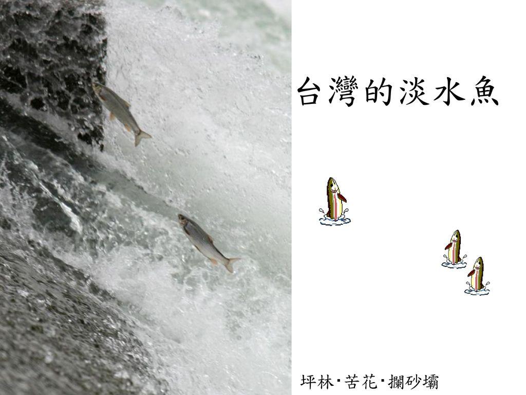 台灣的淡水魚 坪林‧苦花‧攔砂壩