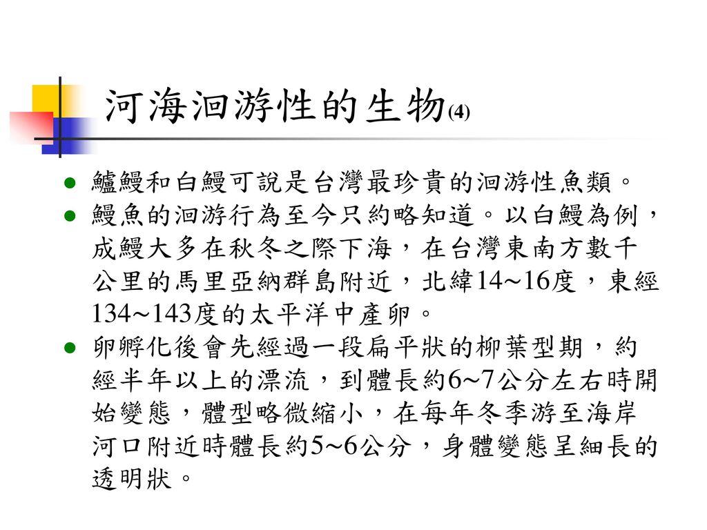 河海洄游性的生物(4) 鱸鰻和白鰻可說是台灣最珍貴的洄游性魚類。