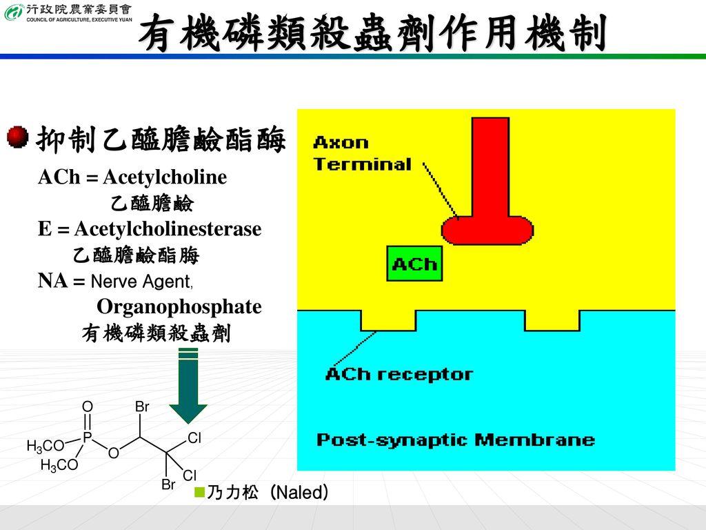 有機磷類殺蟲劑作用機制 抑制乙醯膽鹼酯酶 ACh = Acetylcholine 乙醯膽鹼 E = Acetylcholinesterase