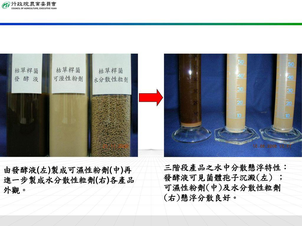 由發酵液(左)製成可濕性粉劑(中)再進一步製成水分散性粒劑(右)各產品外觀。