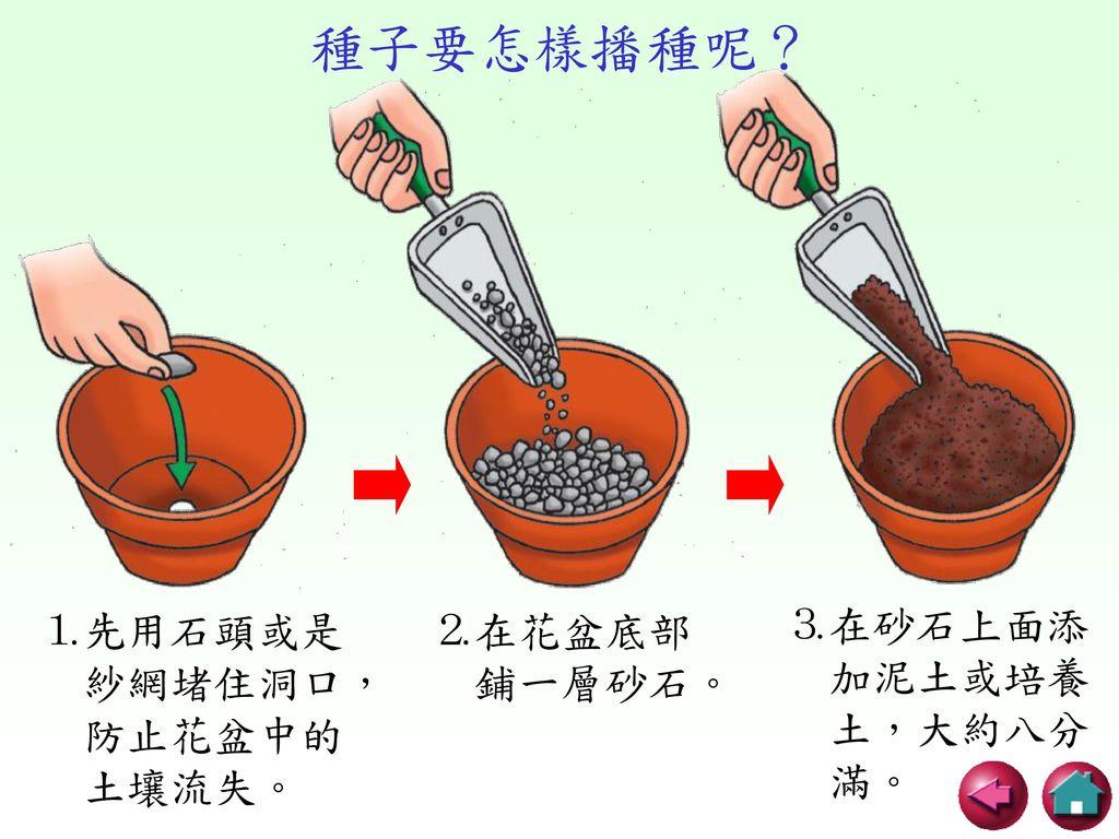 種子要怎樣播種呢? ⒉在花盆底部 鋪一層砂石。 ⒊在砂石上面添 加泥土或培養 土,大約八分 滿。 ⒈先用石頭或是 紗網堵住洞口,