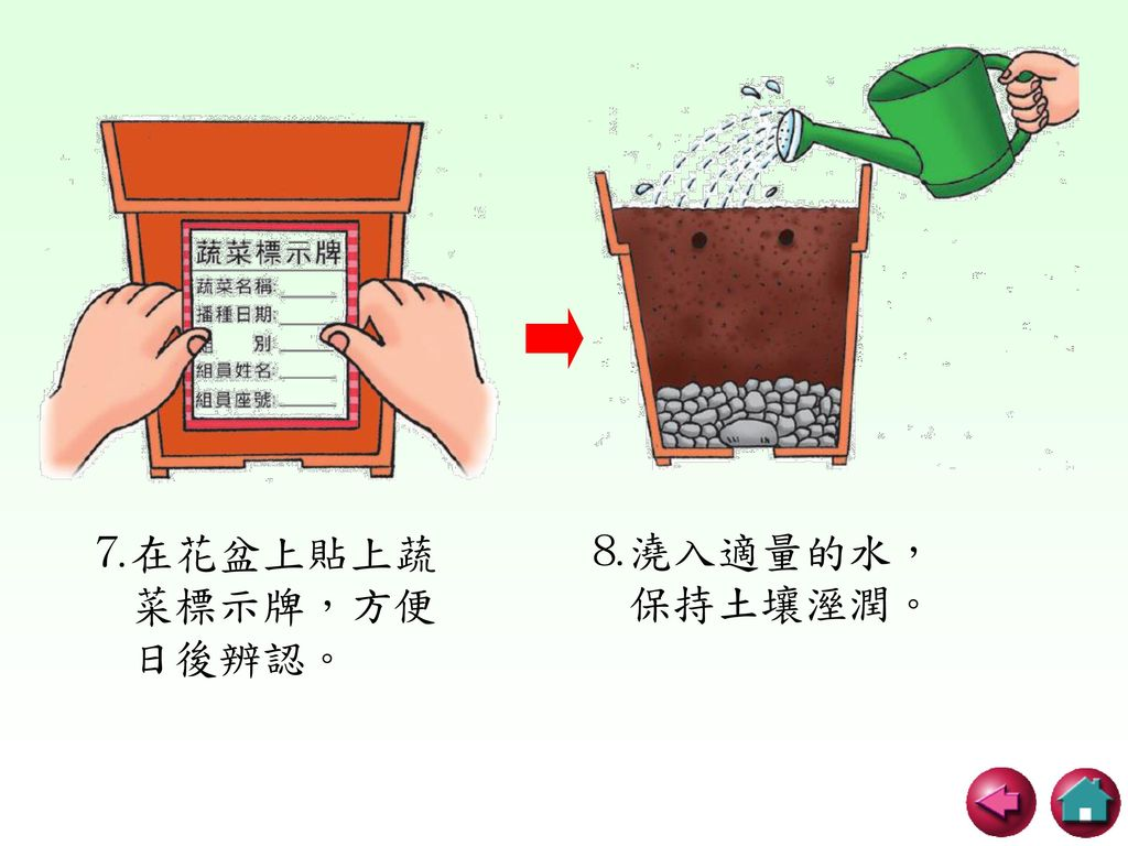 ⒏澆入適量的水, 保持土壤溼潤。 ⒎在花盆上貼上蔬 菜標示牌,方便 日後辨認。