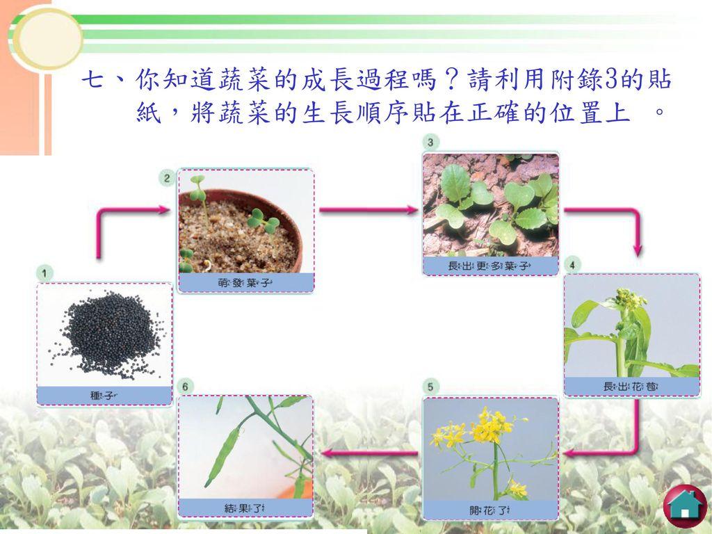 七、你知道蔬菜的成長過程嗎?請利用附錄3的貼
