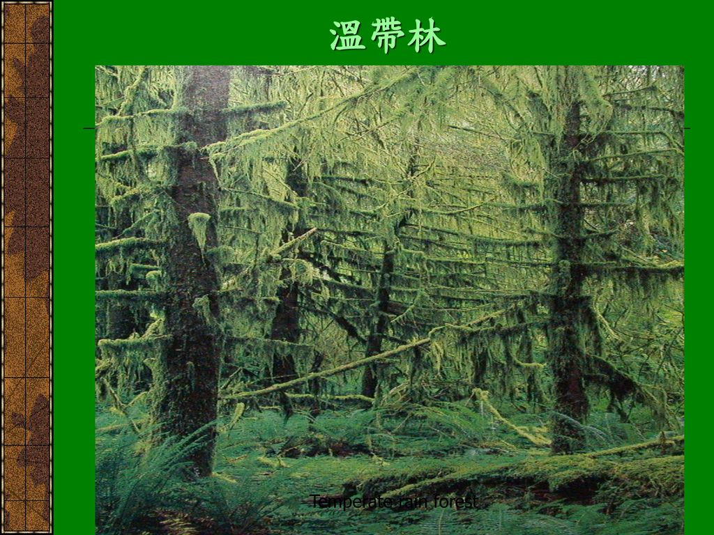溫帶林 Temperate rain forest