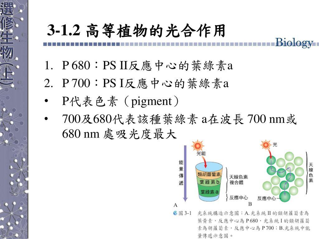 3-1.2 高等植物的光合作用 P 680:PS II反應中心的葉綠素a P 700:PS I反應中心的葉綠素a