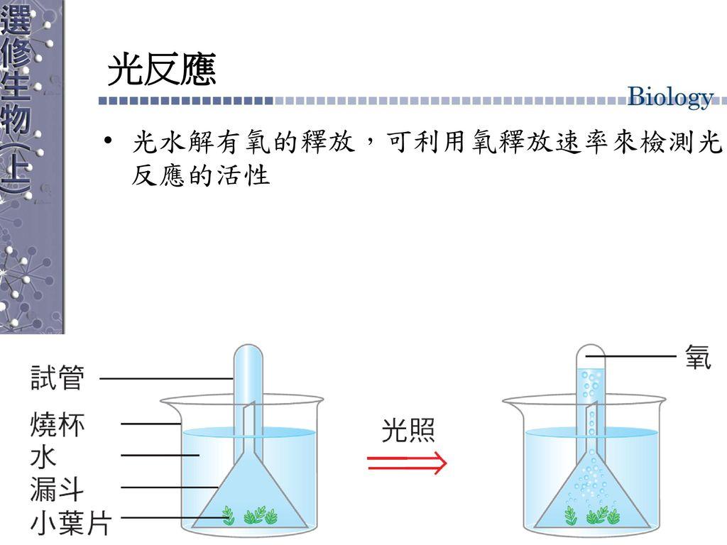 光反應 光水解有氧的釋放,可利用氧釋放速率來檢測光反應的活性