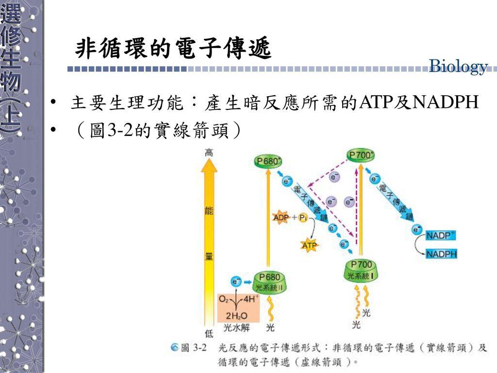 非循環的電子傳遞 主要生理功能:產生暗反應所需的ATP及NADPH (圖3-2的實線箭頭)
